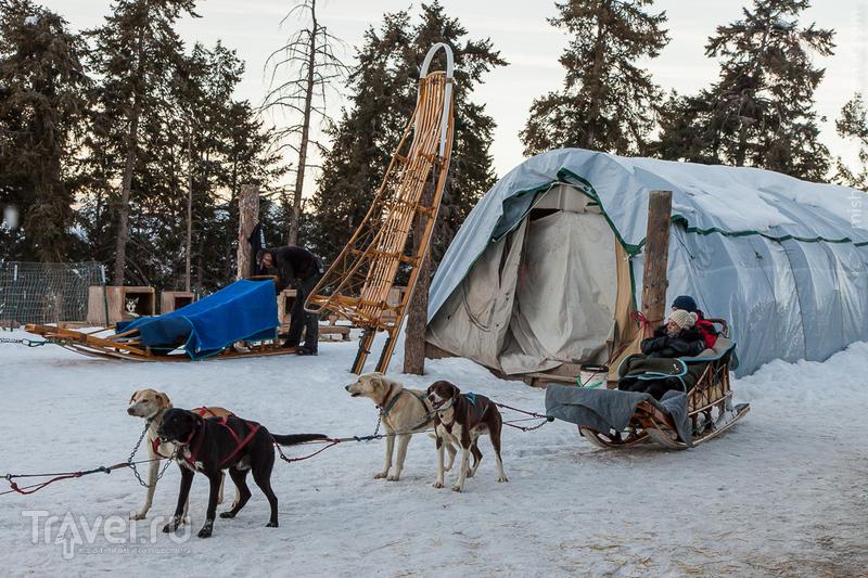 Ездовые собаки в Колорадо / Фото из США