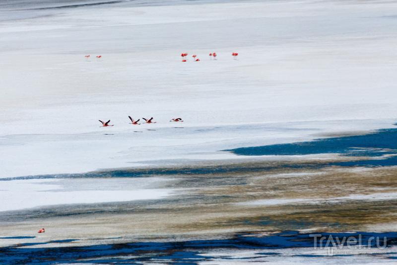По ошибке? Конечно, нет! Награждают сердцами птиц... / Фото из Боливии
