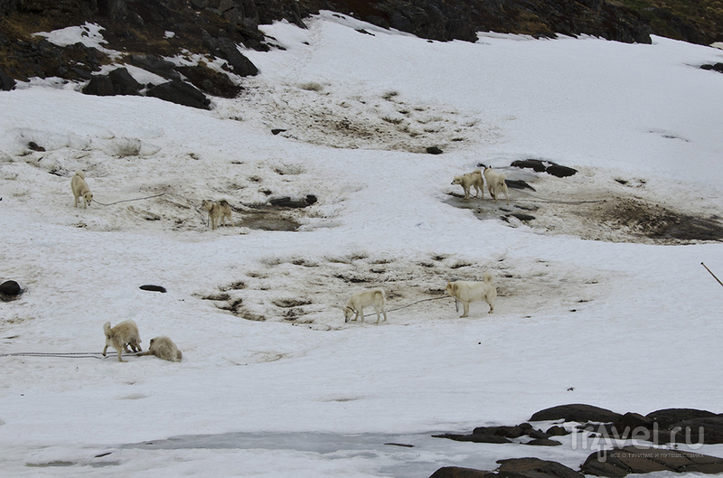 Гренландия - Зеленая Земля / Фото из Гренландии