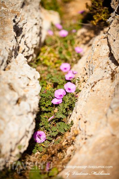 Кипр. Солнечные фото / Кипр