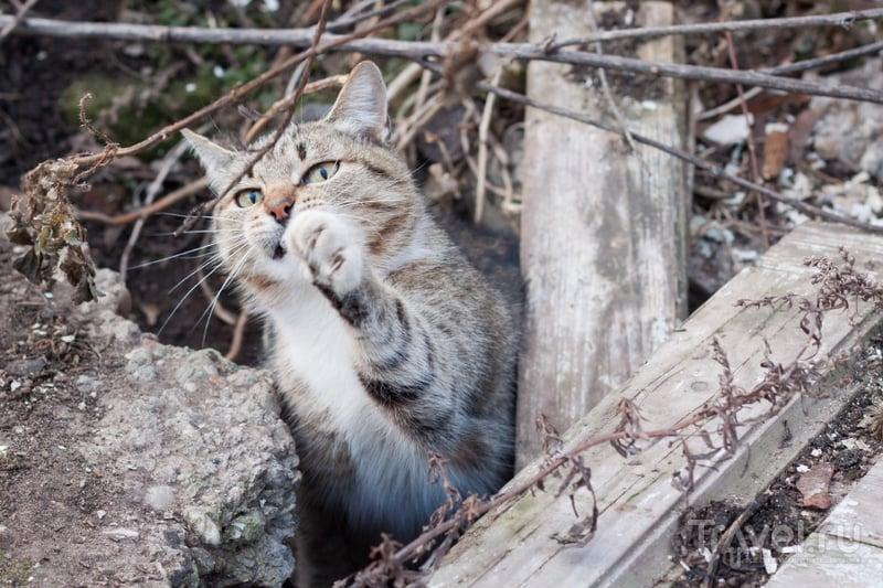 Углич. Коты и колокольни / Россия