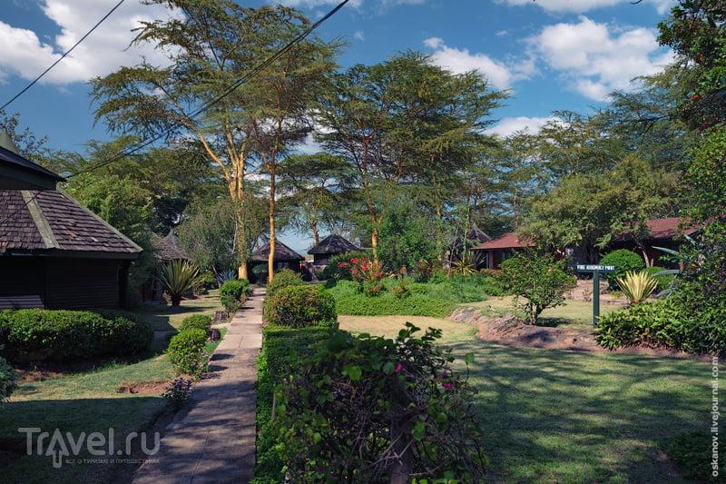 Озеро Накуру / Фото из Кении