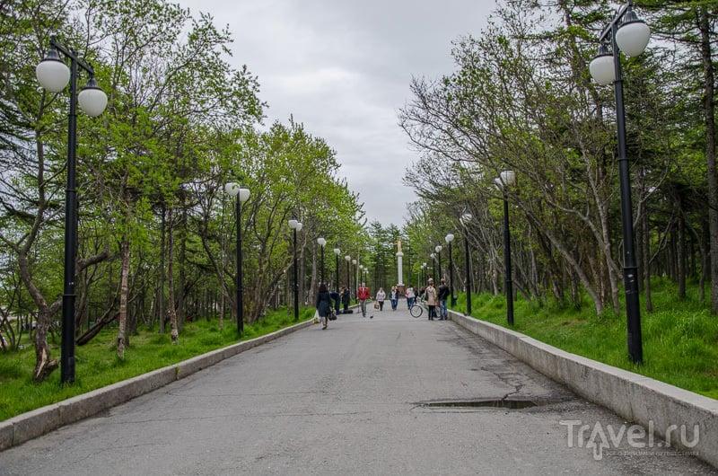 Аллея в парке / Фото из России