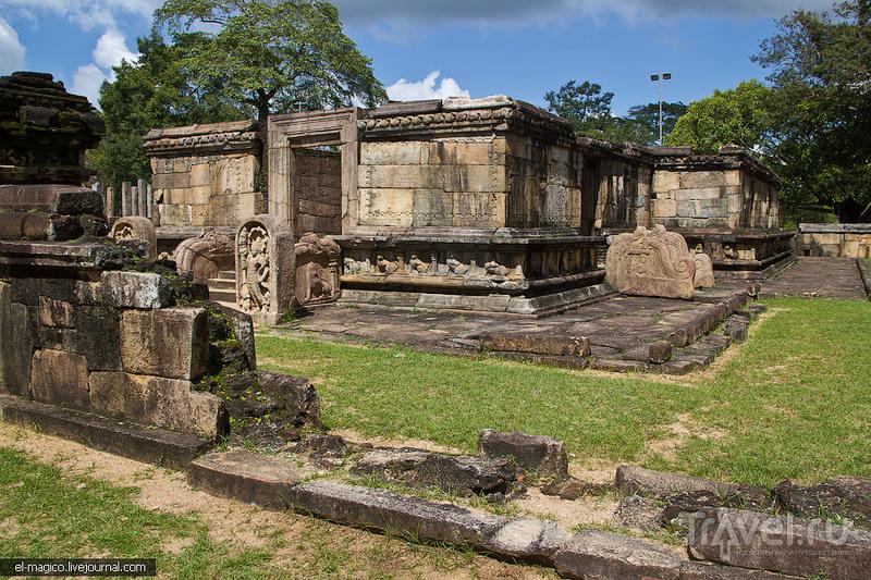 Дикие слоны, прикормленные вараны и средневековая столица Цейлона / Фото со Шри-Ланки