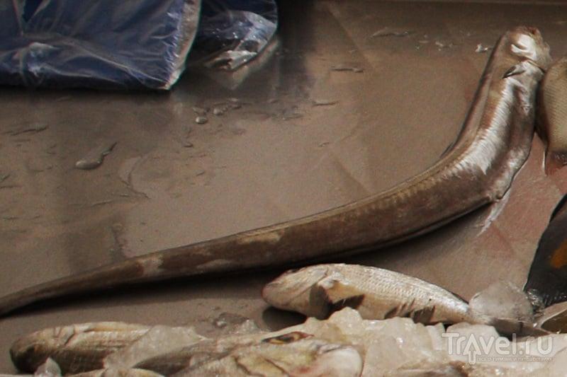 ОАЭ. Поход на рыбный рынок в Аджмане / ОАЭ