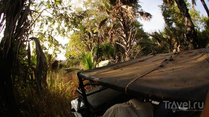 National Park Niokolo Koba, Senegal / Фото из Сенегала