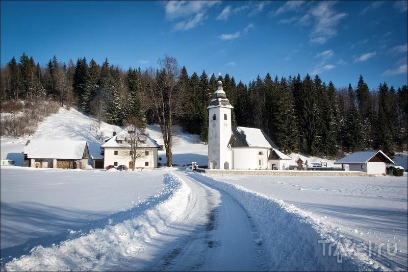 Словенские озёра Блед и Бохинь / Фото из Словении