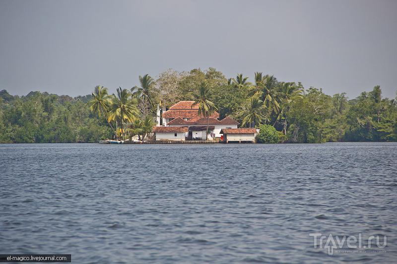 Как делают корицу и кормят рыб туристами. Сафари по Маду Ганге / Фото со Шри-Ланки