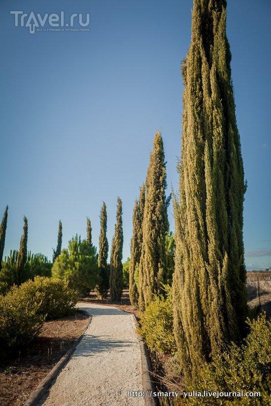Кипр: ботанический сад Cyherbia / Фото с Кипра