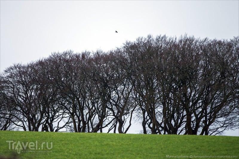 Темная алллея / Фото из Великобритании