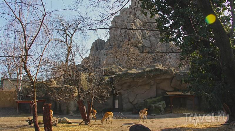 Поход в Будапештский зоопарк / Венгрия
