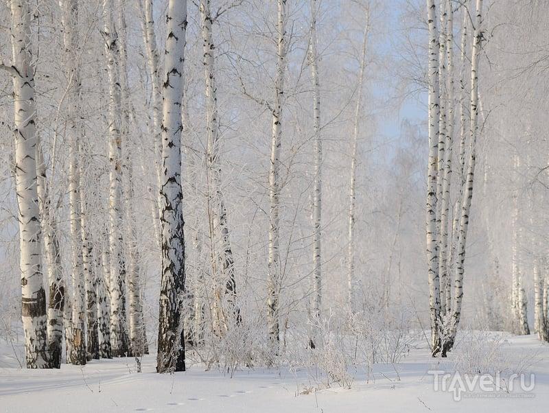 Самарская ЗаВолга на лыжах или антикризисный вариант отдыха / Фото из России