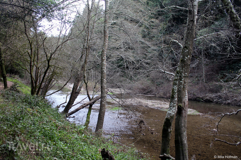 Парк Henry Cowell Redwood / США