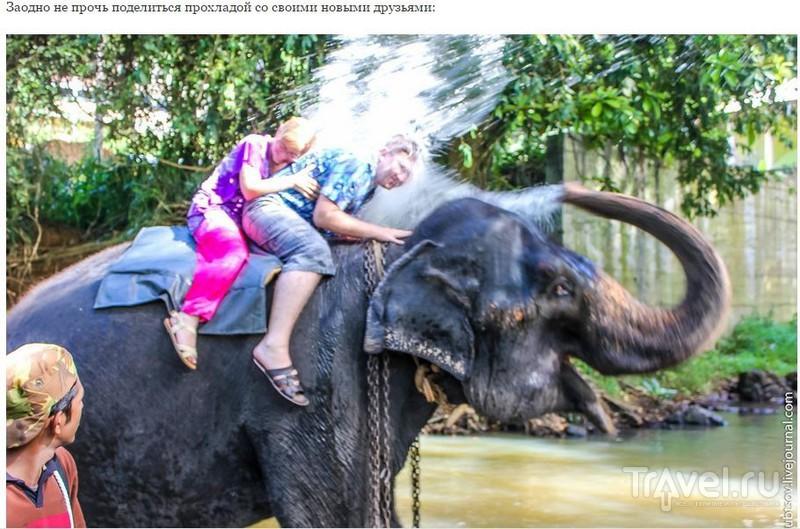 Катание на слонах на Шри-Ланке / Шри-Ланка