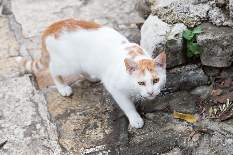 Будва. Старый город / Фото из Черногории