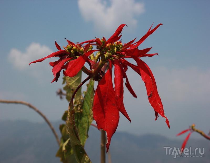 Пещеры Махадева, водопад Дэвиса, Ступа Мира, один день Покхары / Непал