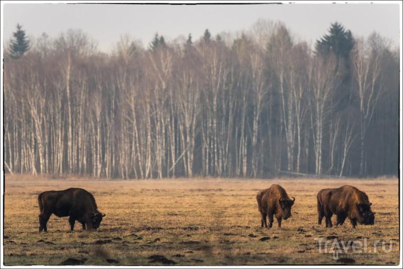 Беловежские сюжеты / Белоруссия