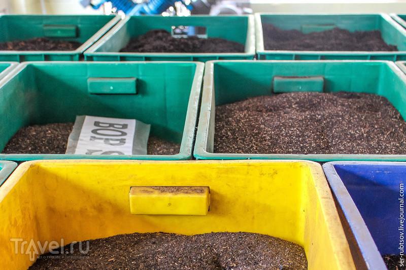 Как я на Шри-Ланке чай собирал / Фото со Шри-Ланки
