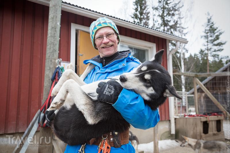 Катание на собачьих упряжках. Хаски в Химосе / Фото из Финляндии