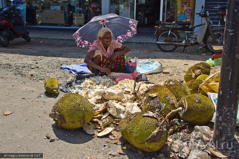 Who is mister Jackfruit? / Шри-Ланка