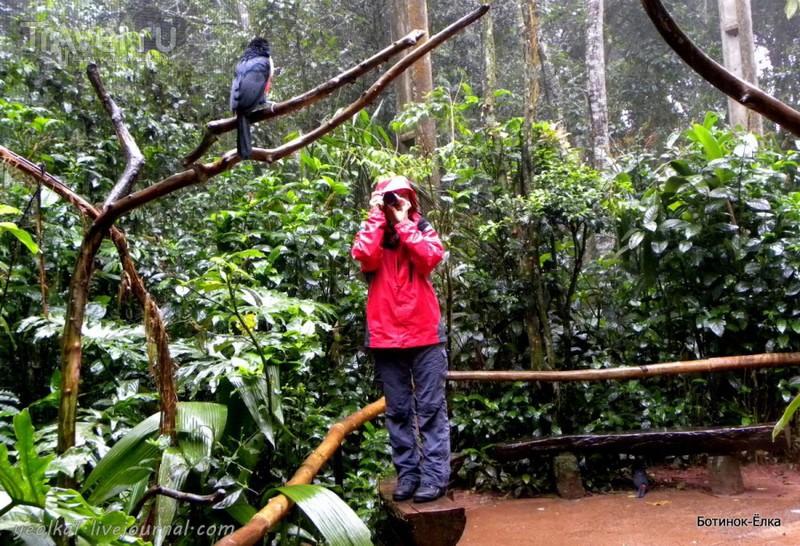 Un gran viaje a América del Sur. Водопады Игуасу. Бразилия. Парк Птиц / Фото из Бразилии