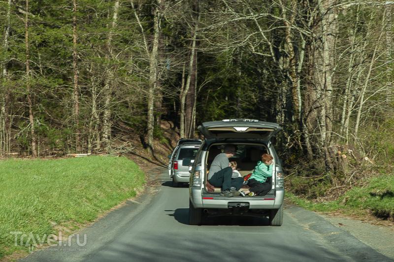 США. Национальный парк Great Smoky Mountains / Фото из США