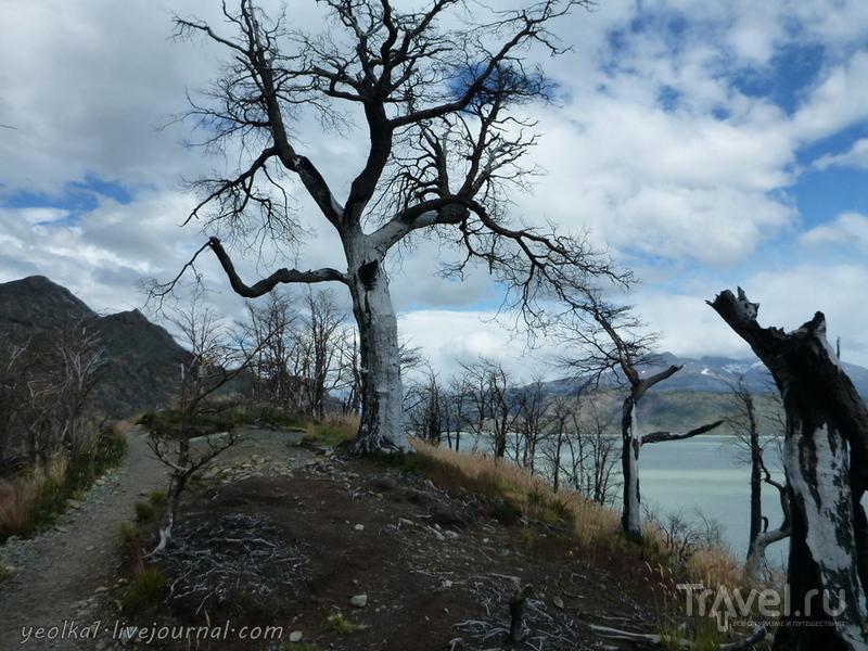 Чили - сбыча мечт! Патагония. Озеро Грей и озеро Пеоэ / Фото из Чили