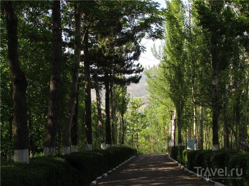 Золотая Бричмулла / Узбекистан