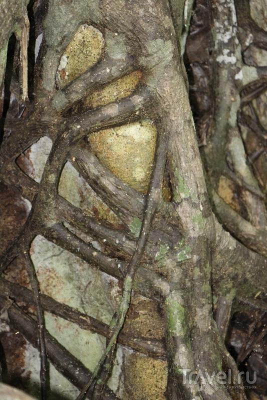 Занзибар: Сказочный лес Джозани (Джозани Форест) / Фото из Танзании