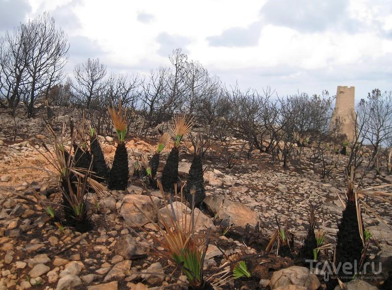 Дикие гладиолусы на пожарище / Испания