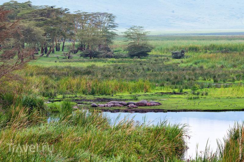 Большое африканское путешествие пятничного формата / Фото из Кении