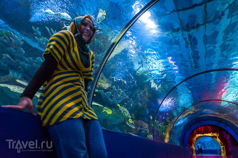 Подводный мир Анталии / Турция