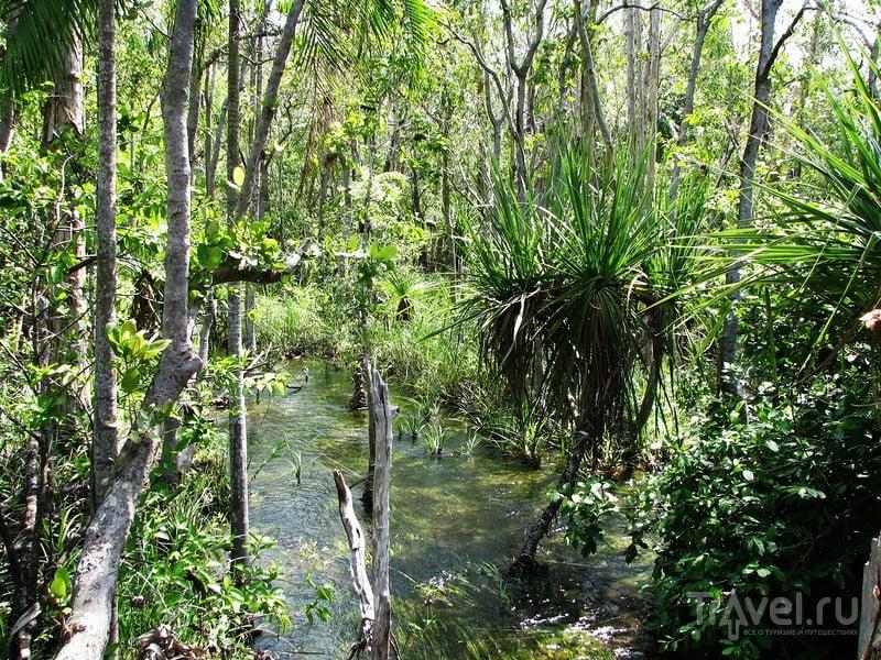 Дыхание дикой Австралии. Национальный парк Литчфилд / Австралия