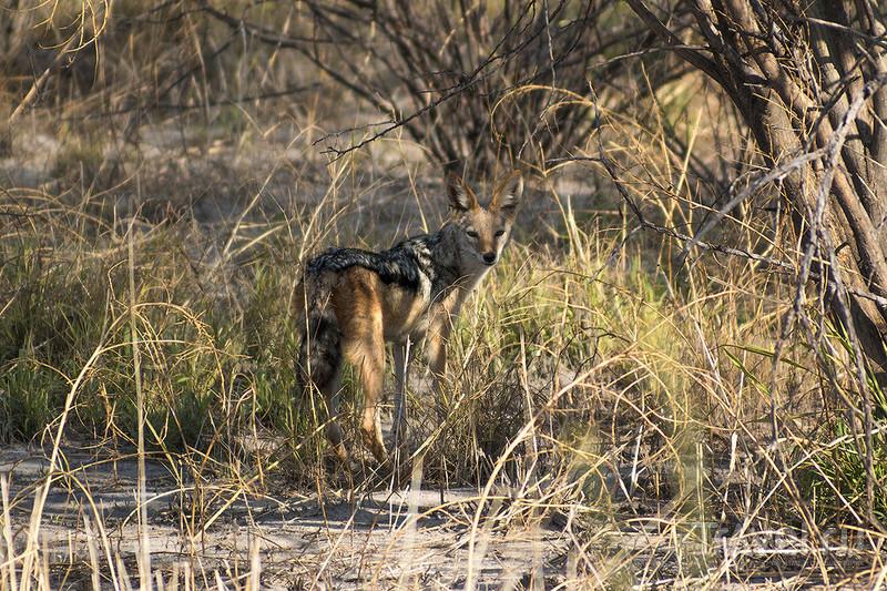 Ботсвана. Сафари в Калахари / Фото из Ботсваны