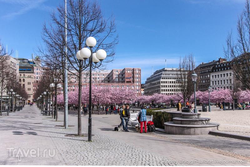 Первомай в Шведском королевстве / Фото из Швеции