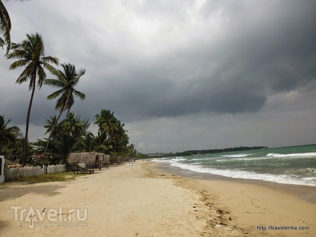 Что представляет собой Упувелли в несезон / Шри-Ланка