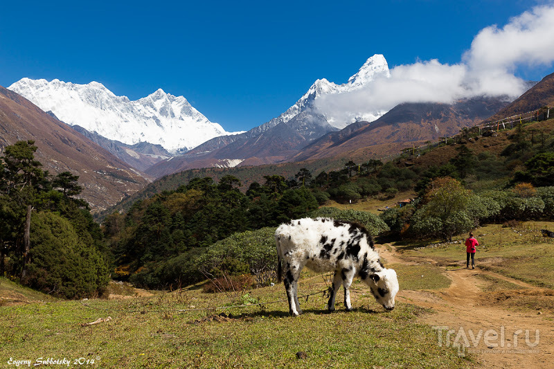 Страховки в походы, или: Помоги Себе Сам! / Непал