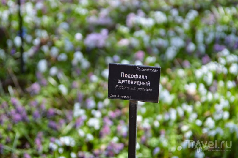 Аптекарский огород / Фото из России