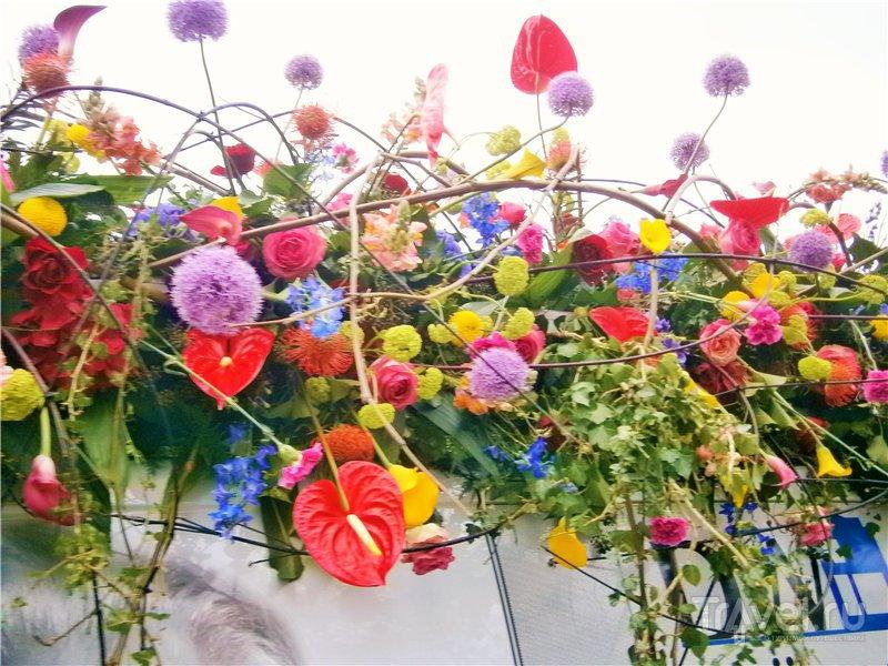 Голландский Парад Цветов / Нидерланды