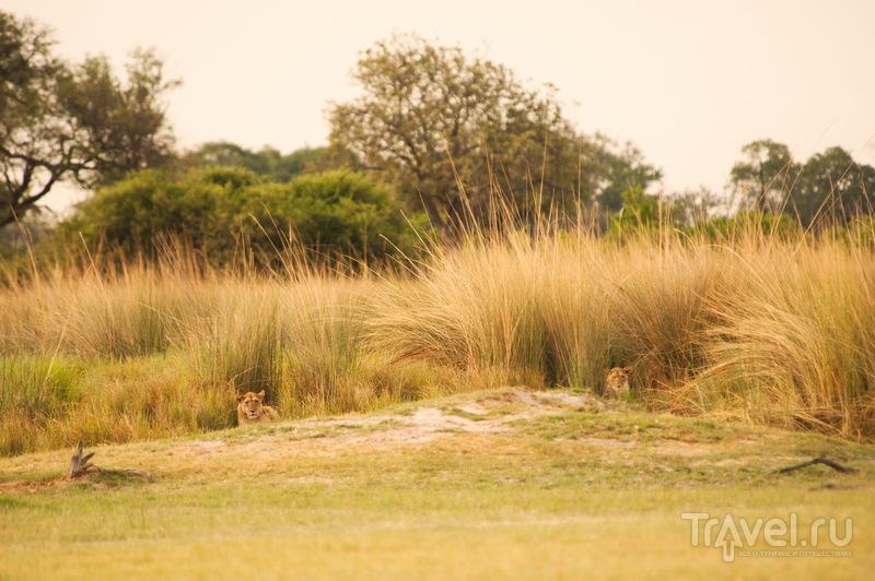 Ботсвана. Пешее сафари в Дельте Окаванго / Фото из Ботсваны