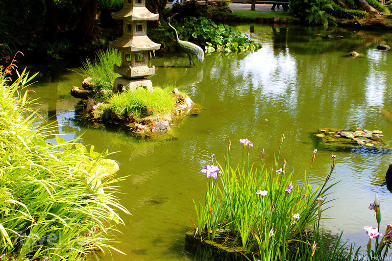 Японские сады Сан Франциско / Фото из США
