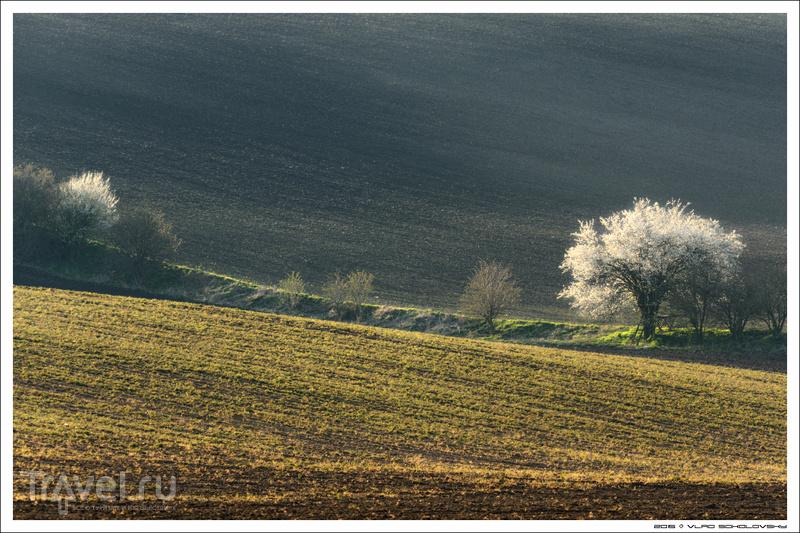 Весна в Южной Чехии / Фото из Чехии