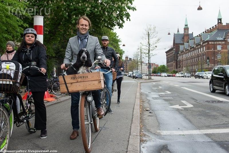 Ползущие зомби Копенгагена / Фото из Дании