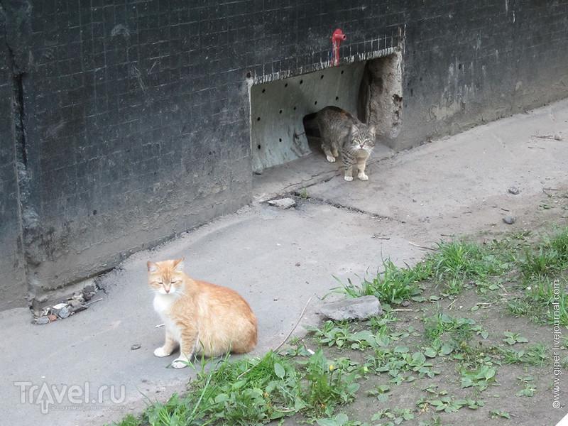 Один мой ночь / Россия