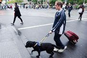 Для собак-поводырей - свои правила