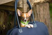Самых маленьких животных можно взять в ручную кладь