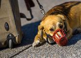 Собака в транспорте должна быть в наморднике