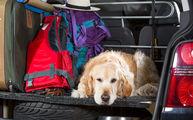 Собака в машине готова ехать домов