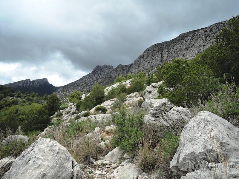 На вершину Сегарии (Segaria) / Фото из Испании