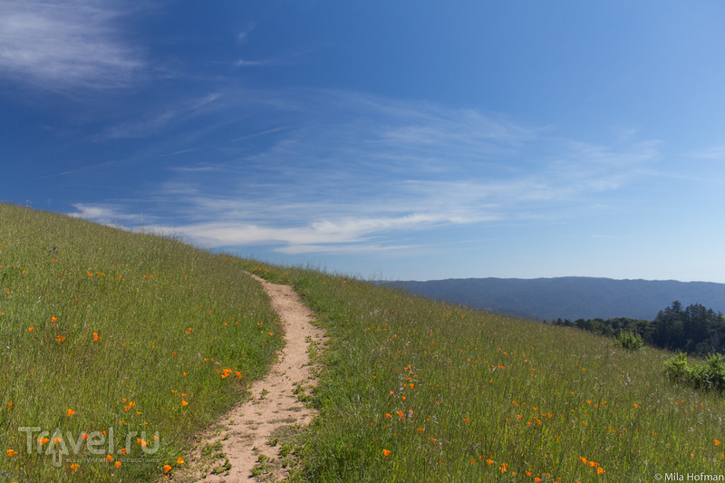 Парк Skyline Ridge / Фото из США